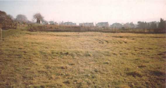 bog as field