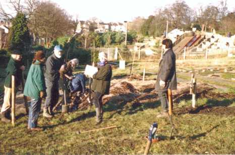 orchard planting